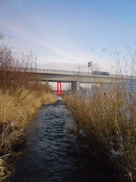 平和大橋右岸側を上流側から見てます!
