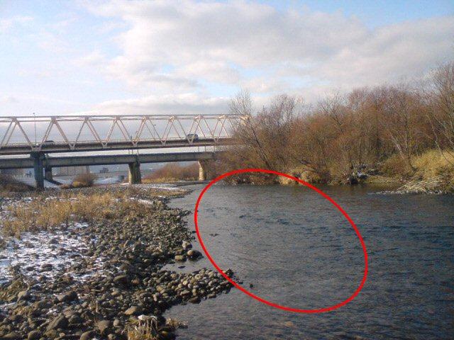上白石橋を下流側から見てます!赤円の範囲にサケがいました!