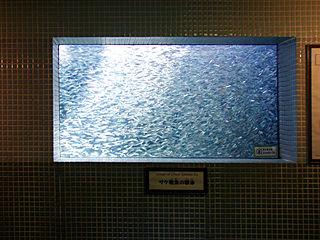 稚魚の群泳展示