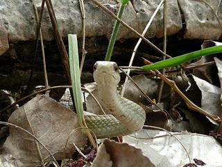 ヤブからヘビ