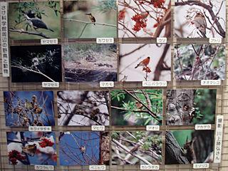 さけ科学館周辺の野鳥