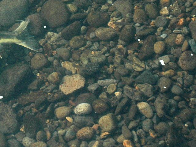 写真右側に小魚がたくさんいます(クリックして拡大)