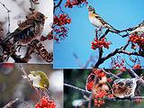 冬の鳥4種