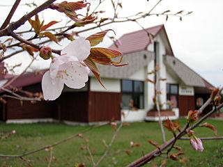 さけ科学館の桜も開花