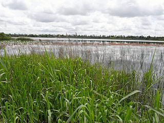 結構広い沼です