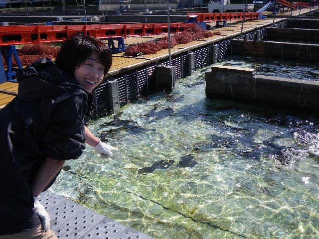 初めて見る蓄養池!M職員も興奮!
