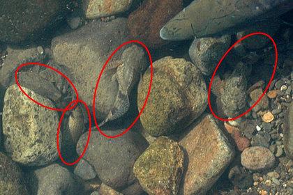 石化け…見つかっちゃった?