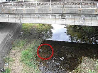 鉄橋下でつがい発見