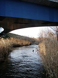 上流側から清流橋下を望む