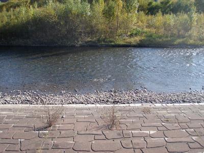 北13条大橋上流の観察ポイント