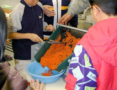 サケの採卵実習