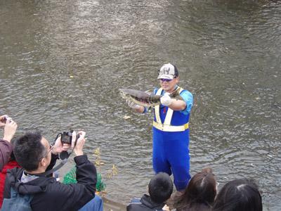 11月の琴似発寒川サケ観察会