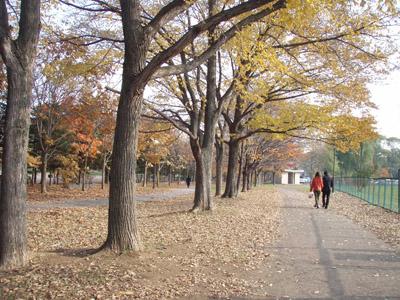 秋の農試公園