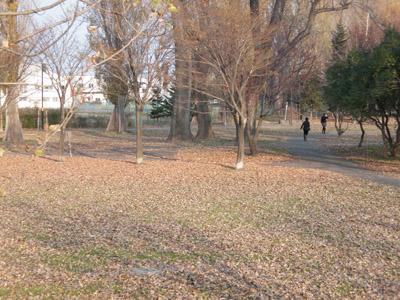 晩秋の農試公園