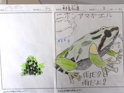 カエルの絵