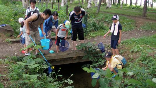 屯田川で増えるアメリカザリガニを探す