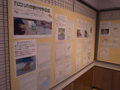 カエルの絵展2013