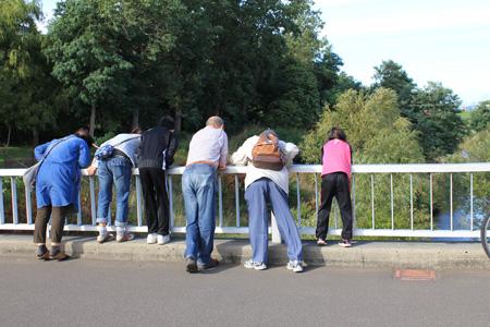真駒内川公園橋からサケを見る人々