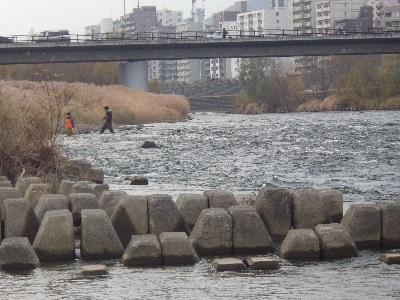 20131118豊平川産卵床調査