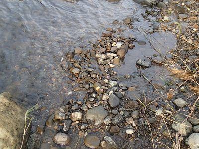 水から少し出てしまった産卵床