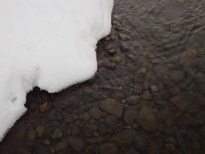 雪の下にある産卵床