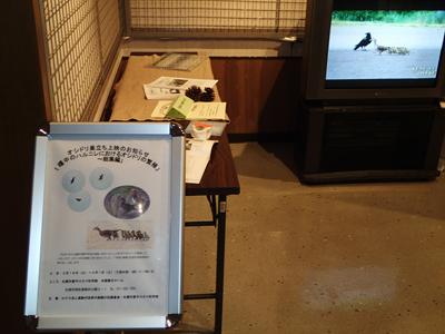 オシドリの繁殖DVD上映