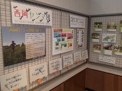 西岡公園自然調査報告展