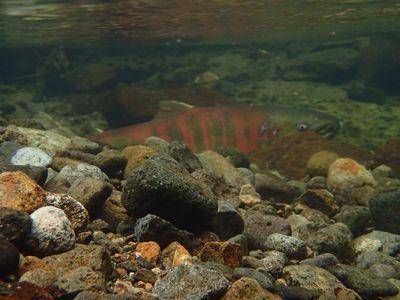 惜しい水中写真