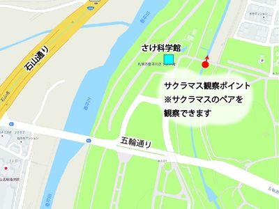20161001真駒内川サクラマス観察ポイント